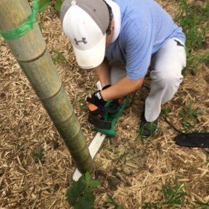 9月 竹の伐採